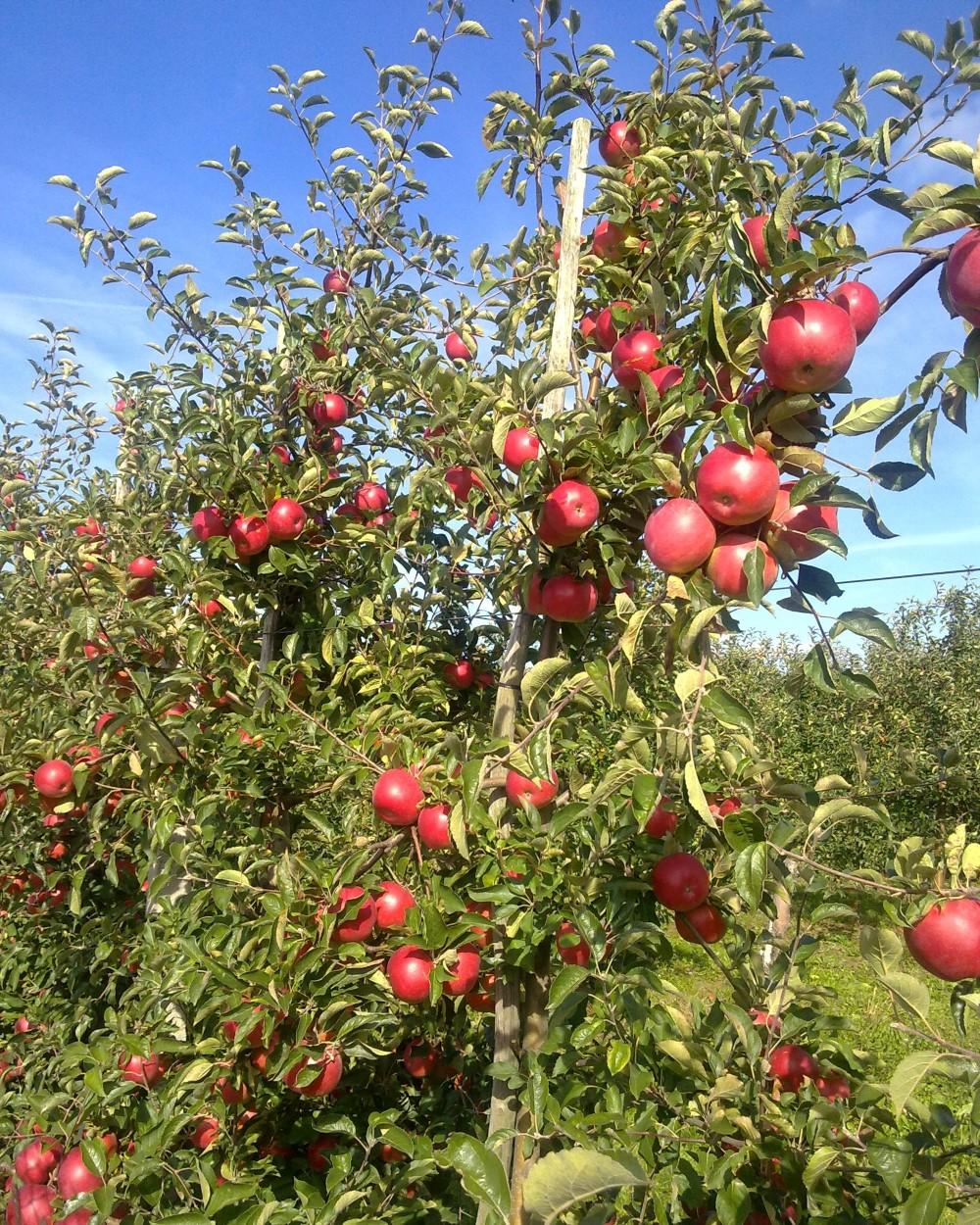 16012011433 - Obst & Gemüse aus Polen