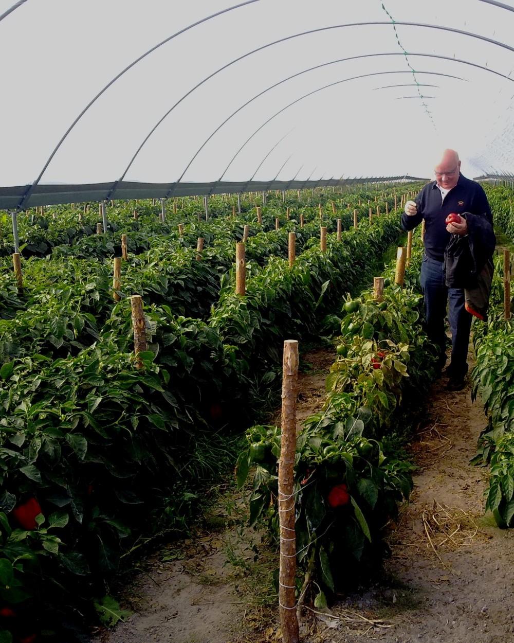 17012011471 - Frutta e verdura dalla Polonia