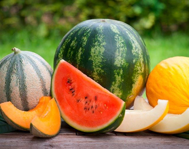 Melone 1 - Melonen