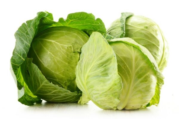 White Cabbage cavolo cappuccio 1