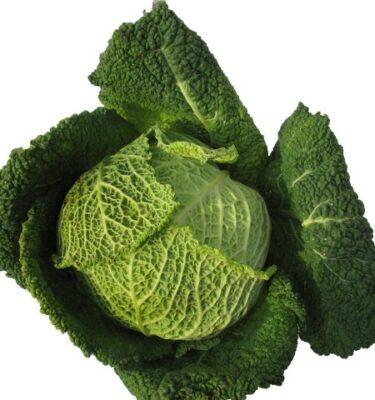 cavolo verza 375x400 - Savoi Cabbage