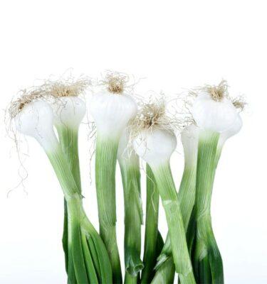 cipollotti 375x400 - Spring onion