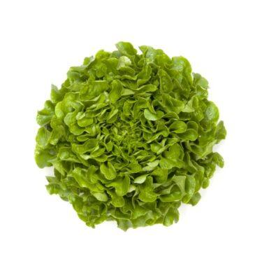 foglia quercia 375x400 - Oakleaf salad