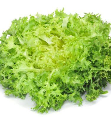 frisee lettuce 375x400 - Frisee